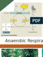 Anaerobic Respiration & Photosynthesis