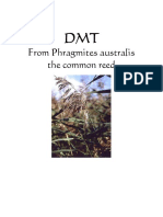 Extracción-DMT From Phragmites Australis - The Common Reed