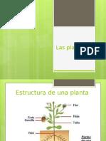 estructura y tejido plantas.pptx