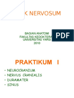 Blok Nervosum 1