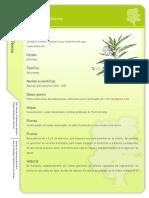 Ficha Botánica