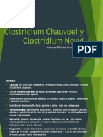 Clostridium Chauvoei
