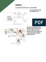 Sistema Hidráulico, CañeriaEW