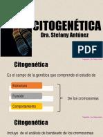 CG18 Citogenética