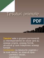 Tesuturi animale