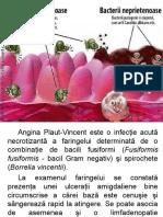 Microbiologie orala
