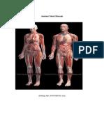 Anatomi Tubuh Manusia.doc