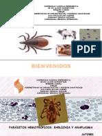 Diapositivas Con Video (Ehrlichia y Anaplasma)