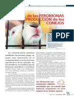 Papel de Las Feromonas en La Reproducción de Los Conejos