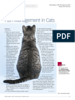 Pain Management in Cats