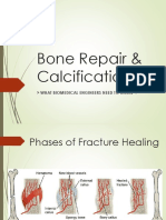 Bone Repair & Calcification