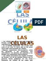las células completo.pptx
