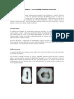 Acceso Endodontico y Localizacion de Conductos (AAE)