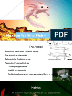 adaptation and evolution  axolotl