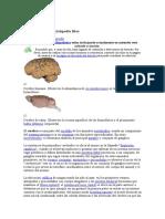 Psicologia Tarea