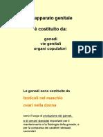 Anatomia - Appunti - Apparato Genitale Femminile