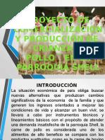 Proyecto de Comercializacion y Producción de Crianza