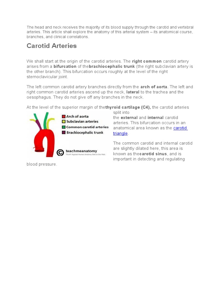 Arterial Supply Head and Neck | Common Carotid Artery | Neck