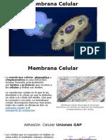 Membrana Celular 04.16 (1)