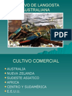 cultivo de langosta australiana-140916202721-phpapp02