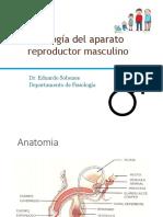 Fisiología masculino 2016