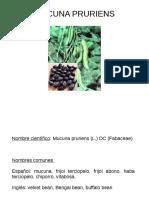 Mucuna_Presentación