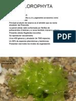 9e61e246-767b-4__laboratorio macroalgas.ppt