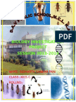 Biology Investigatory Project,Xii,Cbse on Insects