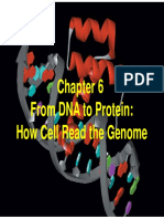 2013 10 31-From DNA to Protein