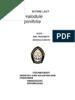 134644701-Lamun-Halodule-pinifolia.doc