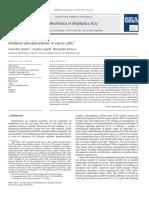 oxidative phosporylation in cancer cells