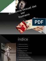 Anatomía Sexual Del Ser