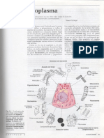 3-citoplasma1