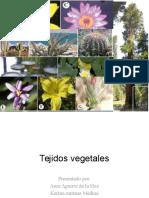 Tejidos vegetales.pptx