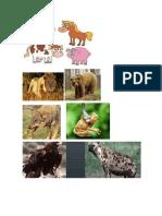 Animales Primarios
