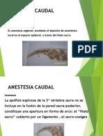 Anestesia-Caudal.ppt
