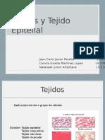 histologia Tejidos