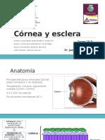 Córnea y esclera.pptx