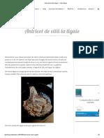 Antricot de Vită La Tigaie — Adi Hădean