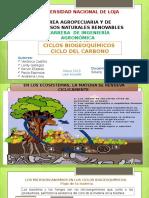 Ciclo Del Carbono Final....(1)[1]