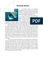 Basking Sharks Description
