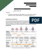 Maduración de Linfocitos B - Producción de Anticuerpos
