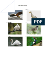 Lima Jenis Burung