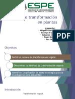 Técnicas de Transformación