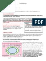 6 FIEBRE REUMATICA.pdf