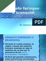 Arcos faringuis embriologuia