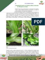 02. Efectos Del Exceso de Humedad Del Suelo en El Sistema Radical y Absorcion de Nitrogeno en El Maiz