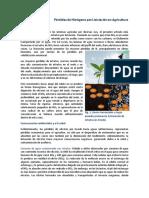10. El Lavado de Nitratos en La Agricultura
