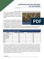 08. La Eficiencia en El Uso Del Agua Por Las Plantas