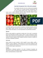 33. Mexico Es El Primer Exportador de Aguacate LImon ChIle Verde y Guayaba